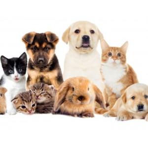 Evcil Hayvanlarda Yiyecek katkısı